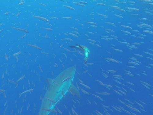 Những điểm đến lý tưởng để vui đùa cùng cá mập