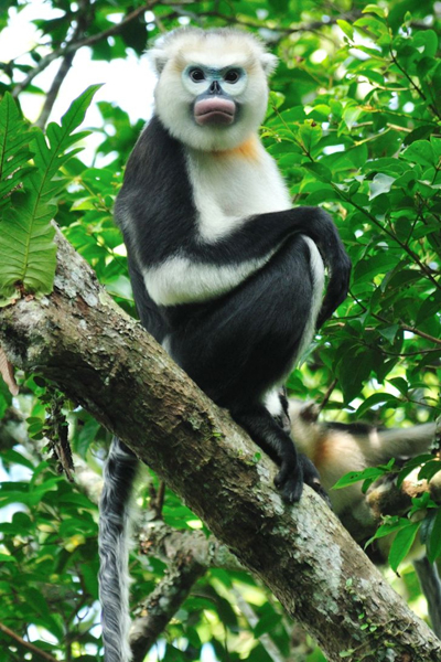 Chương trình bảo tồn động vật vinpearl safari