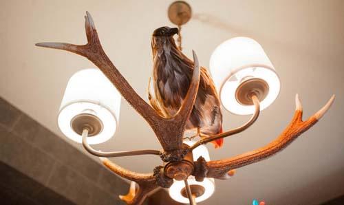 Khách sạn ma thuật cho fan harry potter