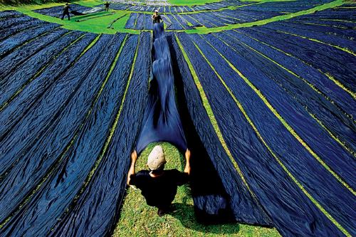 Làng nghề lụa tân châu