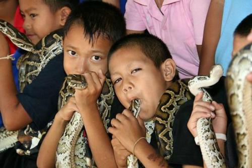 Ban kok sa-nga - ngôi làng coi rắn độc như thú cưng