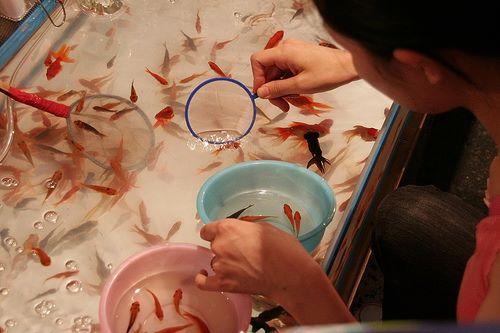 Vớt cá vàng kiểu nhật - thử thách gian nan cho du khách