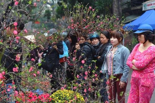 Hàng lược chợ hoa xuân nổi tiếng đất hà thành