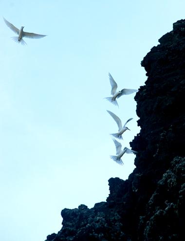 Bức tranh đá lung linh ven biển đảo miền trung