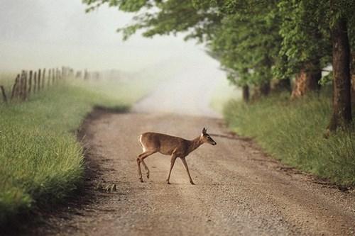 Những động vật có khả năng bỗng dưng gây họa cho con người