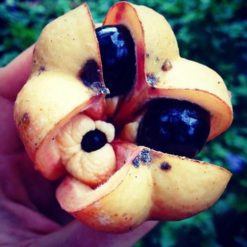 17 loại trái cây những người sống ở xứ lạnh ít biết tới