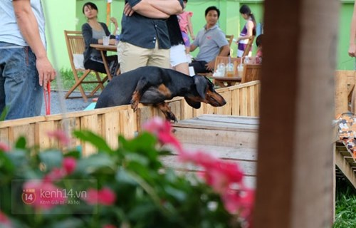Cận cảnh khu vui chơi dành cho cún cưng đầu tiên ở sài gòn