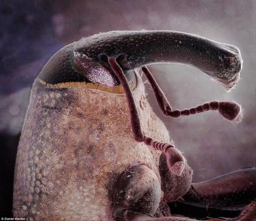 Chân dung những sinh vật ngoài hành tinh ẩn nấp ngay trong nhà