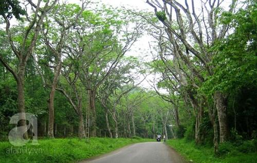 Chuyến du lịch cuối tuần tuyệt vời ở rừng cúc phương