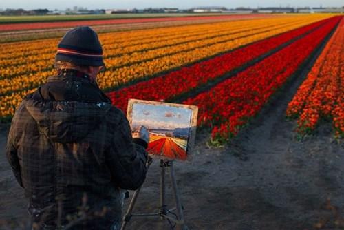 Những cánh đồng hoa phương tây đẹp mê hồn mỗi độ xuân về