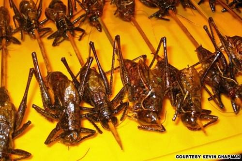 Những món côn trùng khó nuốt ở chợ đêm bắc kinh