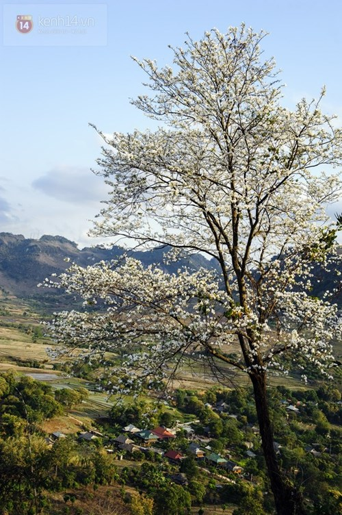Những sắc hoa đầy mê hoặc ở nơi đẹp nhất việt nam trong mùa xuân