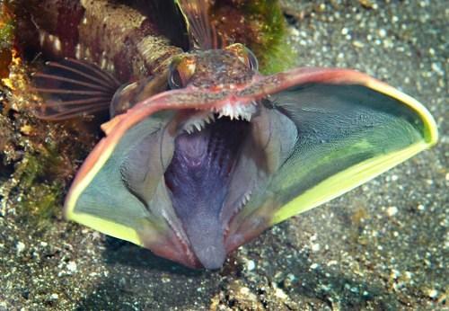 Những sinh vật kỳ lạ trên thế giới