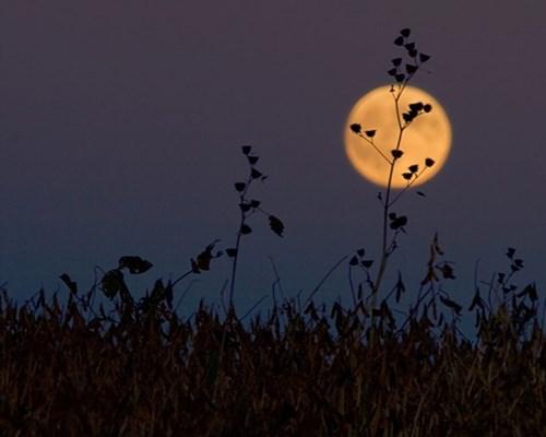 Sắp có nhật thực toàn phần lớn nhất châu âu kể từ năm 1999