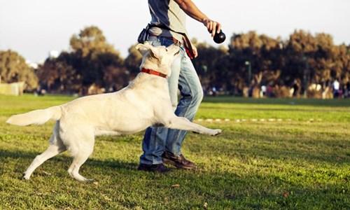 So sánh chuẩn từng cm giữa người nuôi chó và người nuôi mèo