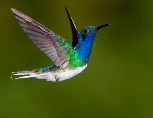 Video xem chim ruồi ngáy khò khò như con người