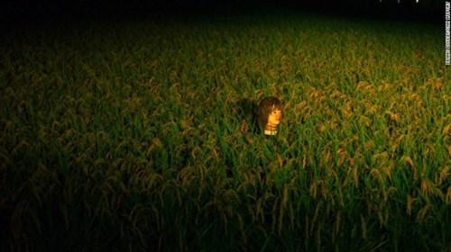 Cận cảnh cánh đồng manơcanh đáng sợ tại nhật bản