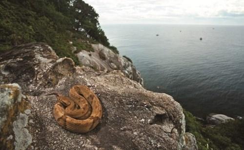Cận cảnh hòn đảo đầy rắn độc - địa danh khủng khiếp bậc nhất tg