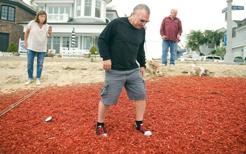 Cua đỏ ngập tràn ở bờ biển california