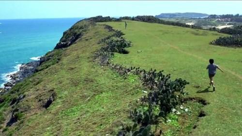 Ghé thăm phú yên để ngắm xứ sở hoa vàng trên cỏ xanh đẹp hơn phim