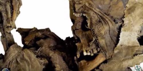 Giải mã khu mộ ma cà rồng ở ba lan