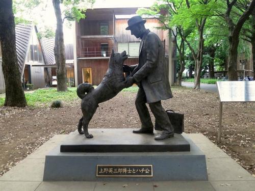 Chuyện kể về chú chó trung thành nhất lịch sử ở tokyo