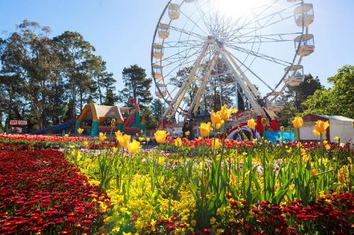 Nhiều hoạt động thú vị tại lễ hội hoa australia