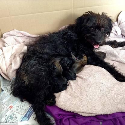 Nữ du khách nhận nuôi chú chó cứu mình thoát khỏi yêu râu xanh