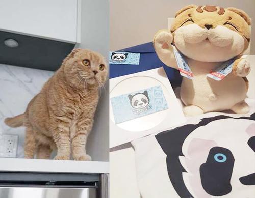 Chuyến du lịch thú vị của mèo bông basil