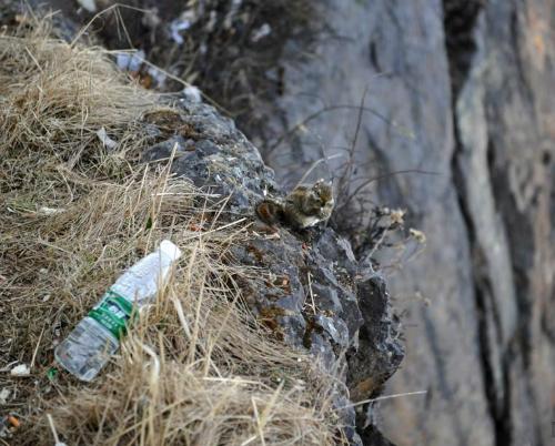 người nhện nhặt rác trên vách núi cao