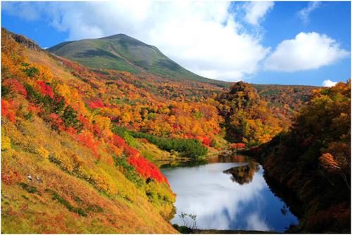 Trải nghiệm vẻ đẹp hokkaido mùa lá đỏ