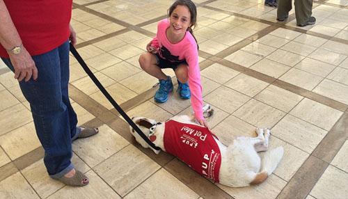 7 động vật được thuê làm nhân viên sân bay