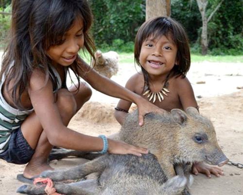 Cuộc sống của bộ tộc nuôi động vật bằng sữa người