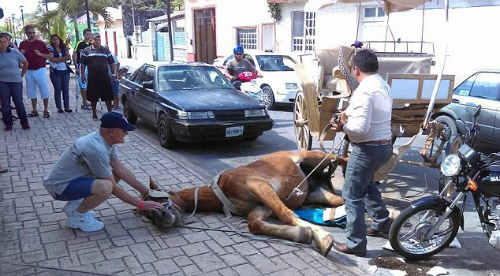 Ngựa chở du khách ngã quỵ trên đường ở mexico