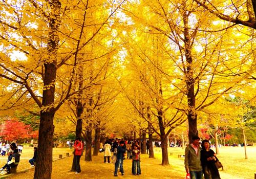 Những điểm đến lãng mạn mùa thu